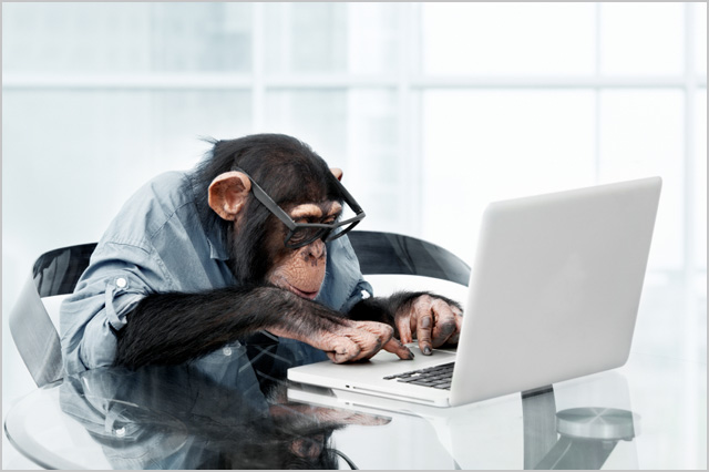 monkey-laptop