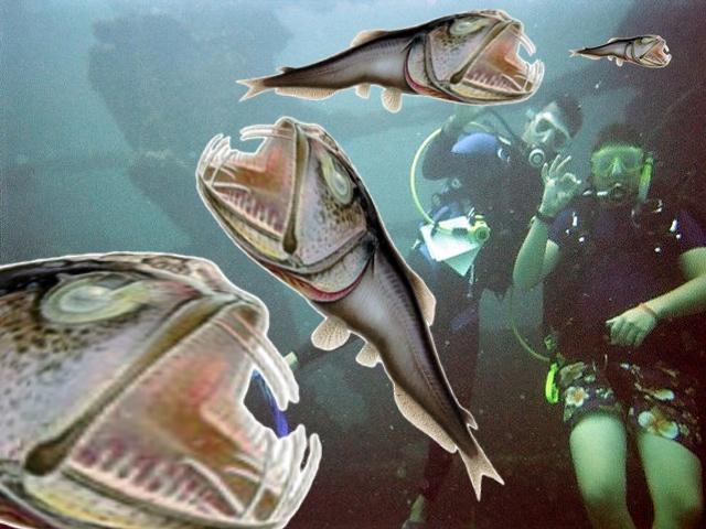 BigFish-Eat-Smaller-Fish