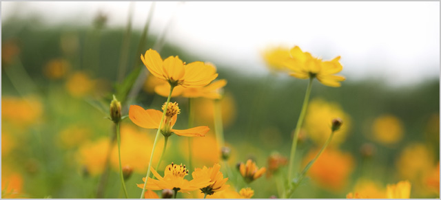 flowers-640